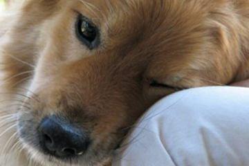 20 πράγματα που δεν πρέπει ποτέ να ξεχνάμε όσοι αγαπάμε τα σκυλιά!