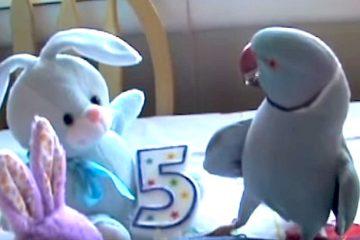 Το απίθανο πάρτι γενεθλίων του Marny του παπαγάλου
