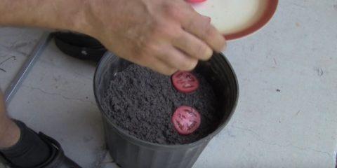 Κόβει τις ντομάτες σε λεπτές φέτες