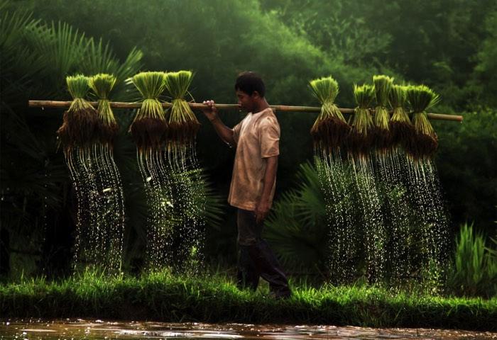 Ένας αγρότης στο Βιετνάμ