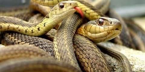 στον ύπνο σου φίδια