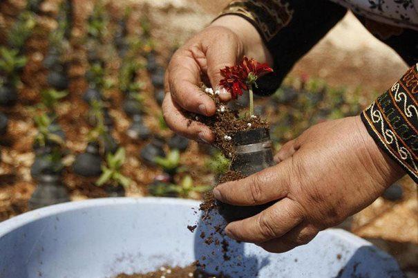 Παλαιστίνη μαζεύει τις Ισραηλινές χειροβομβίδες 9