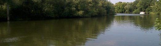 A view of the Thames from a fishing swim on Desborough Island in Surrey