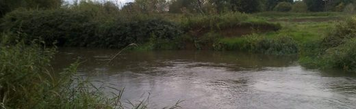 River angling on the Mole: Plough Meadows