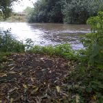 River angling in Cobham