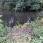 Fishing in Elstead