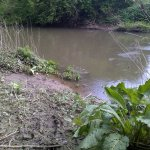 A swim on the Mole downstream of Cobham