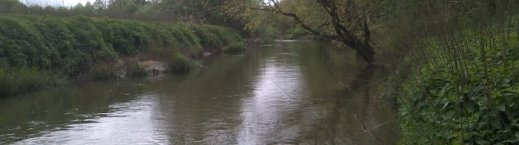 Fishing the Mole in Cobham: downstream of the A245