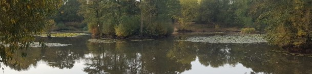 A view across the Gatwick Lake fishing venue controlled by Horley Piscatorial Society