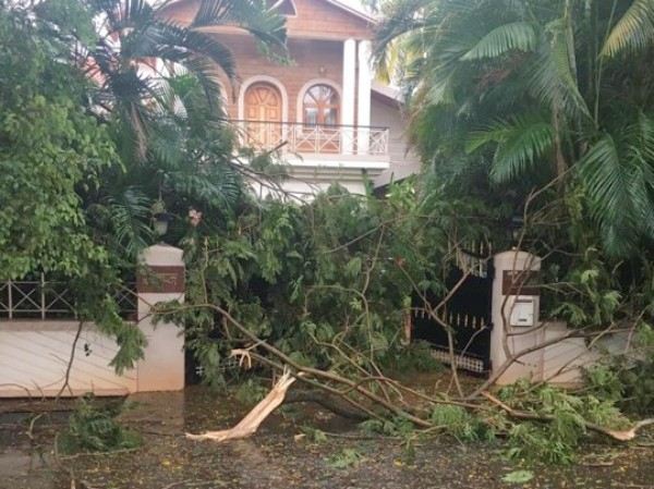 Rain, strong winds uproot trees; power supply hit