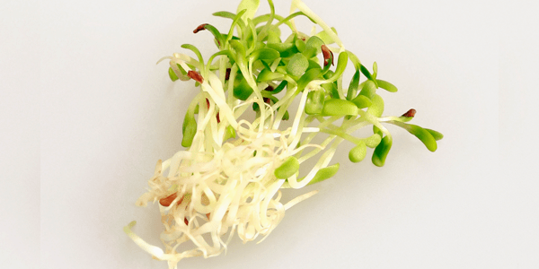 Food that prevent Blackheads - Sprouts