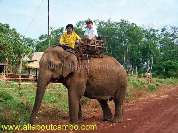 Отдых в Камбодже на слонах