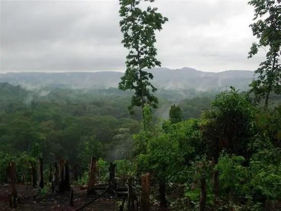 джунгли в камбодже