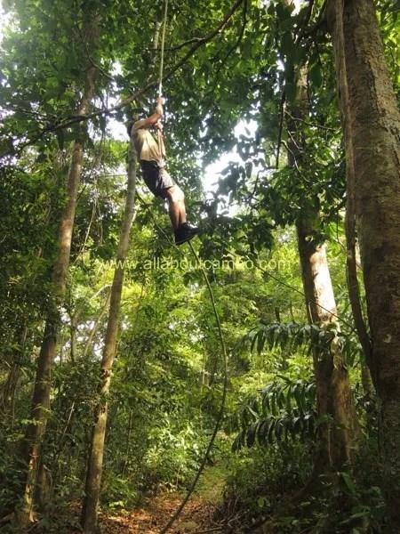 высокие деревья на борнео