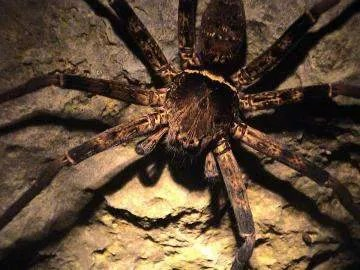 пауки в Камбодже