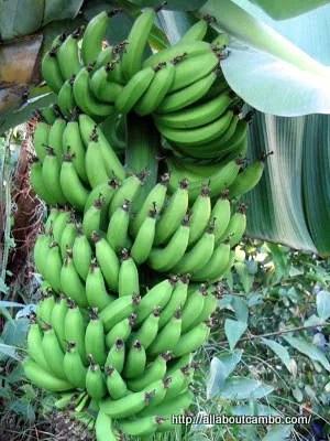 длянные бананы в камбодже