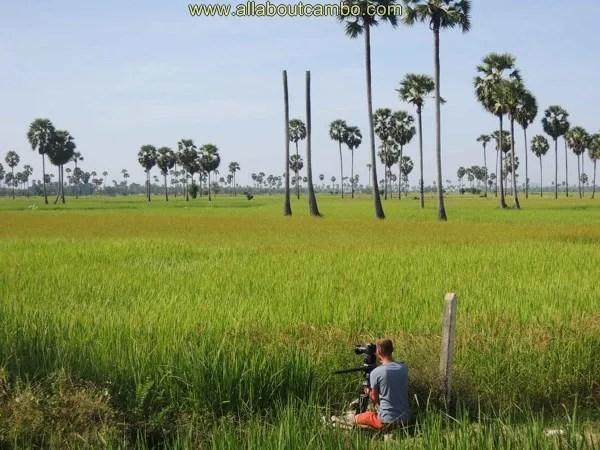 красивые просторы камбоджи