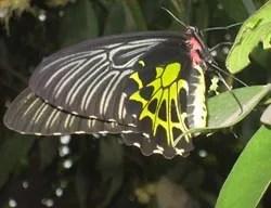 бабочки в Камбодже