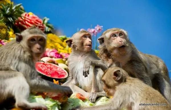 обезьяны лопбури