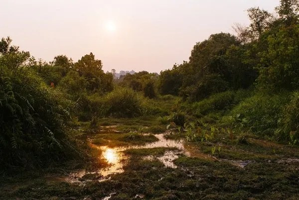 болота камбоджи