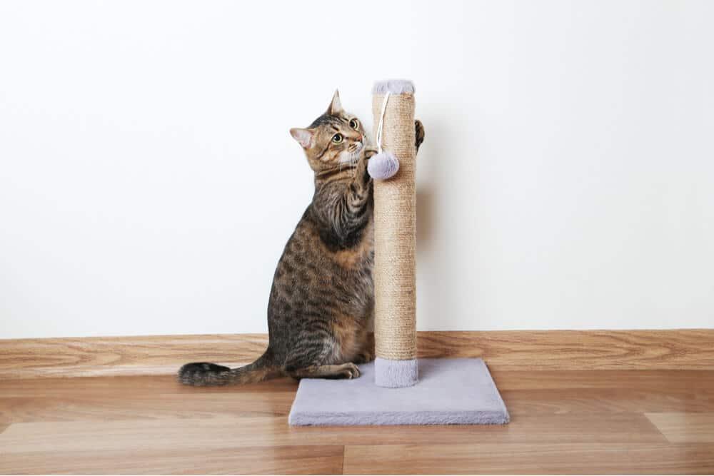 Poste rascador de sisal para gatos