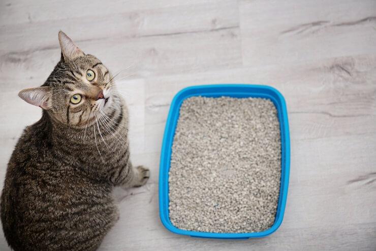Caja de arena con tabla de heces de gato