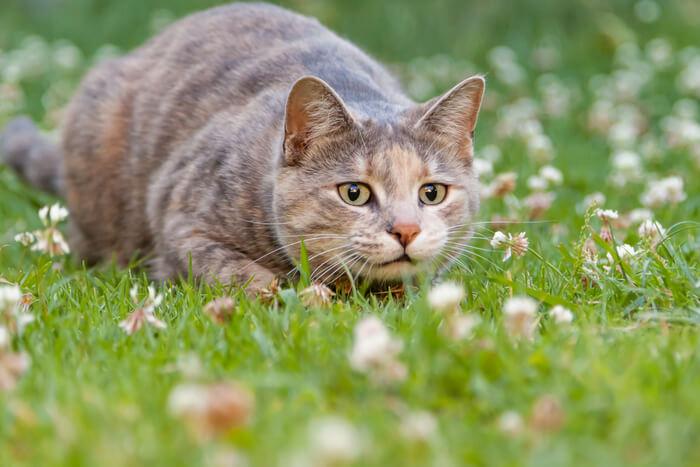 Gato saltando fuera