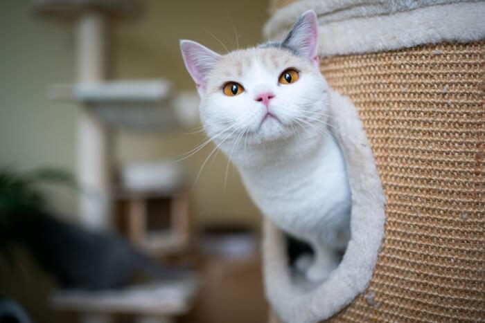 Gato en árbol de gato