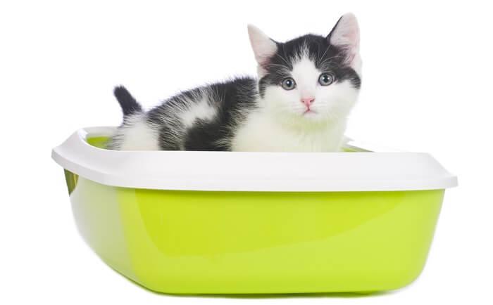 Diarrea en gatos: causas, síntomas y tratamiento