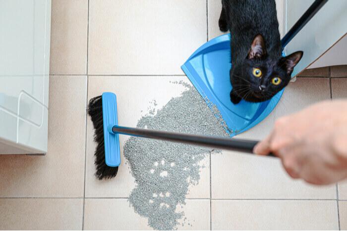 sweeping cat litter