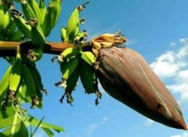 5 Easy Ways To Get Rid Of Pesky Fruit Flies In The Summer