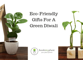 gifting plants for diwali