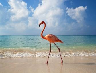 Conociendo el paraíso de la Riviera Maya