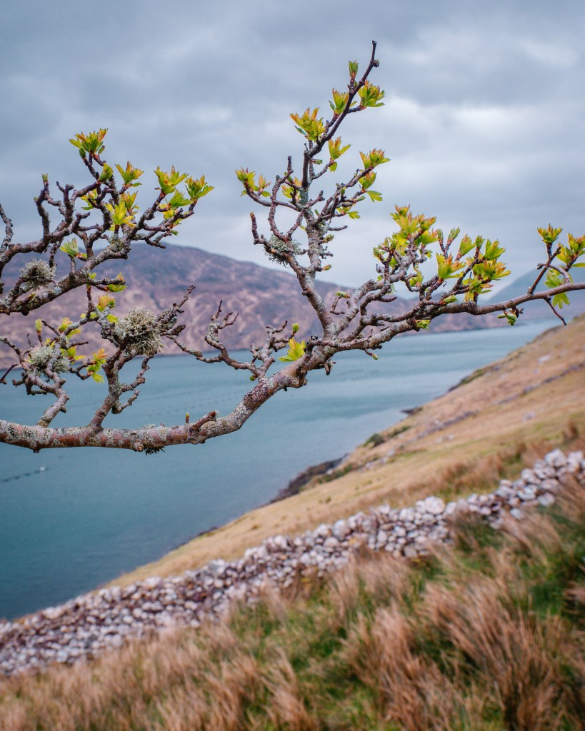 Image of a branch hanging over Killary Harbour in Connemara Galway