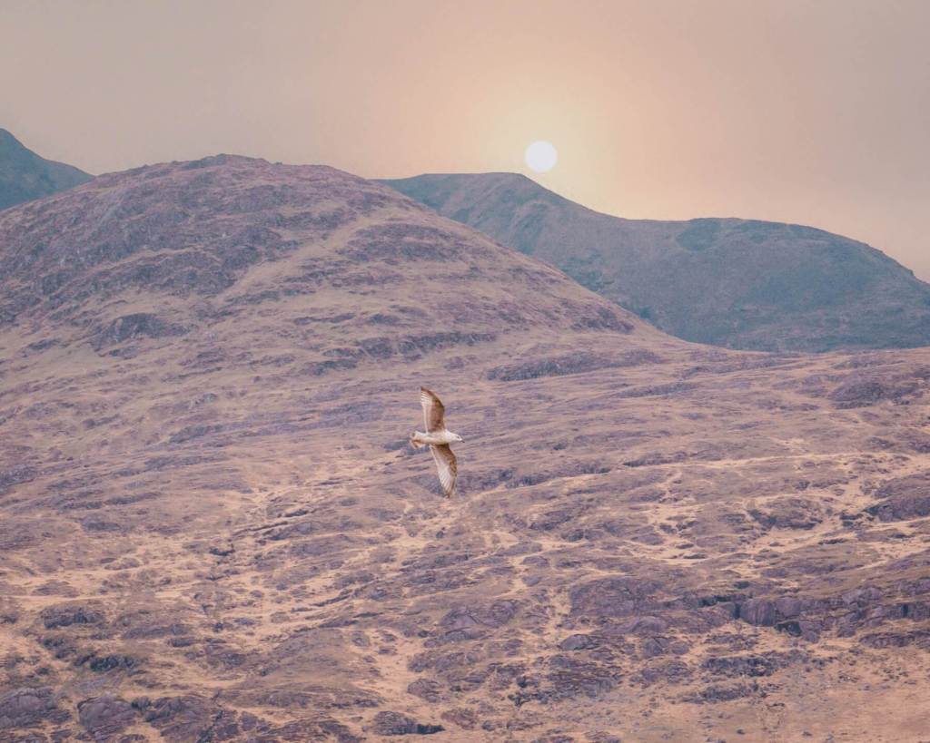 Seagull flying over Killary Harbour in Connemara Ireland