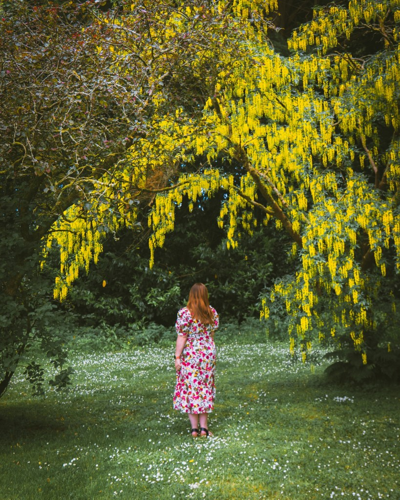 Woman in a flower dress walking under a tree with yellow flowers at Mount Falcon Estate Ireland