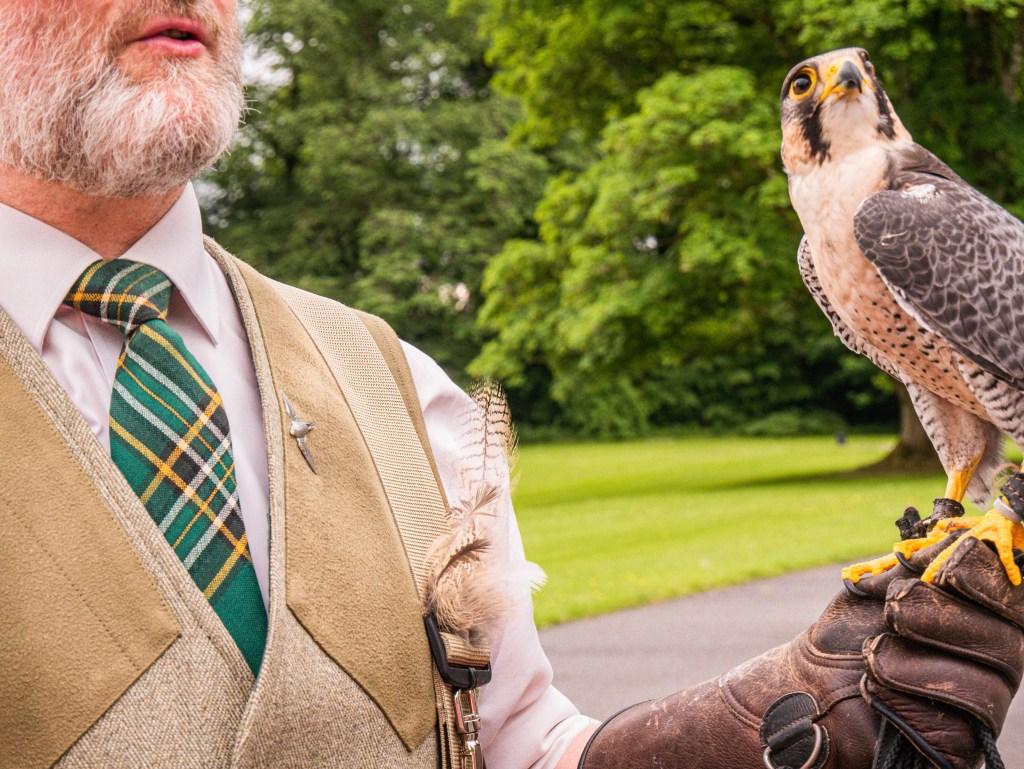 Falconer holding a peregrine falcon on the hawk walk at Mount Falcon Estate Ireland