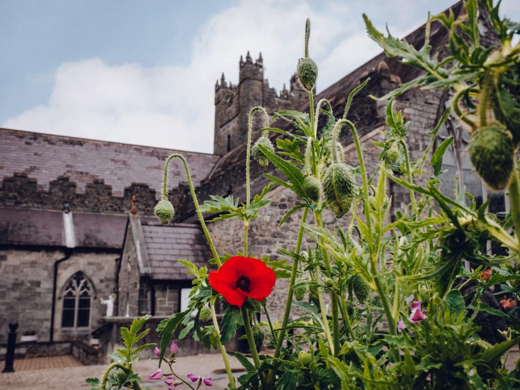 The Black Abbey in Kilkenny Ireland
