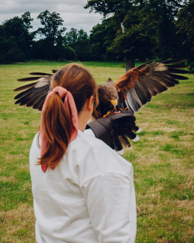 Woman holding a harris hawk on the falconry experience at Lyrath estate on the perfect weekend in Kilkenny