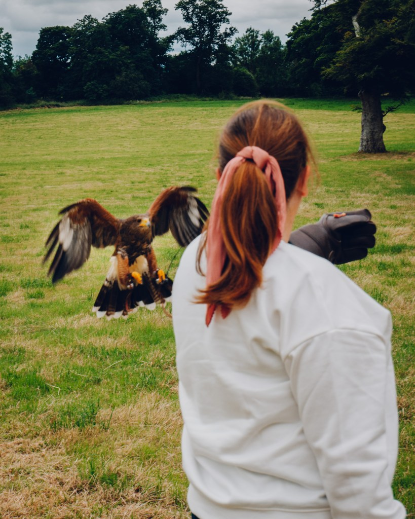 Woman holding out a gloved hand for a harris hawk to land on