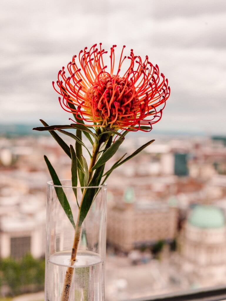 Flower against a backdrop of Belfast city centre