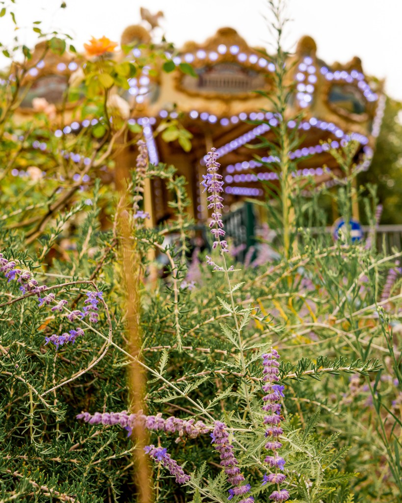 Lavender and a carousel in the jardin public in Bordeaux France