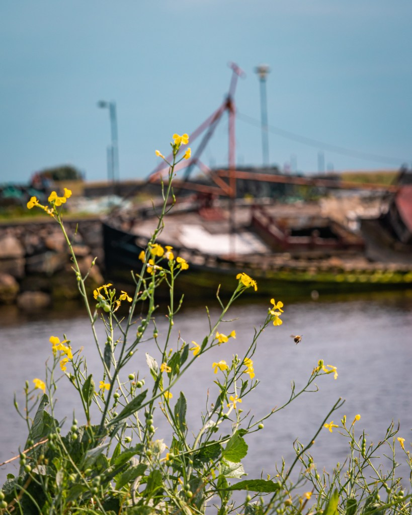 Image of a shipwreck in Galway city