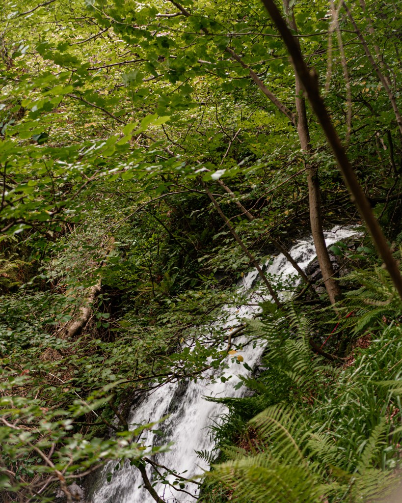 Glenoe waterfall a hidden gem in Antrim