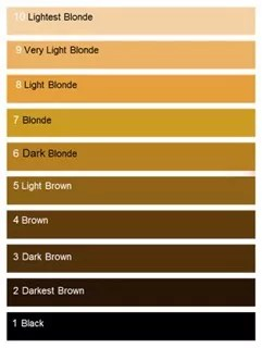 Hair Color Levels