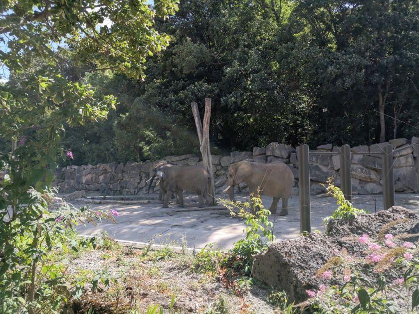 Schönbrunn Zoo - elephants