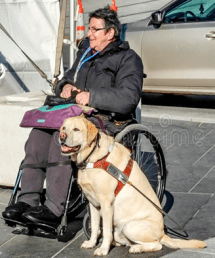 An image of a person in a wheelchair with their service dog.