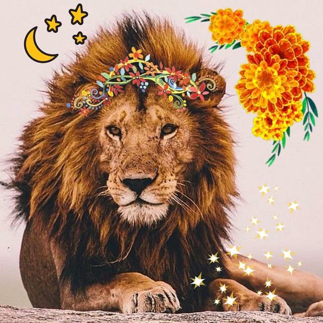leo-season-leos