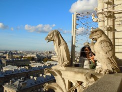 Some of the birds on Notre Dame. (Allan Lynch Photo)