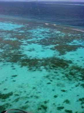 Maldive reef 3
